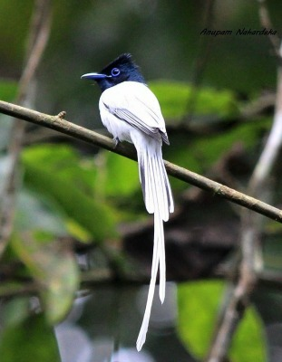 North East India Bird Watching & Photography Tours